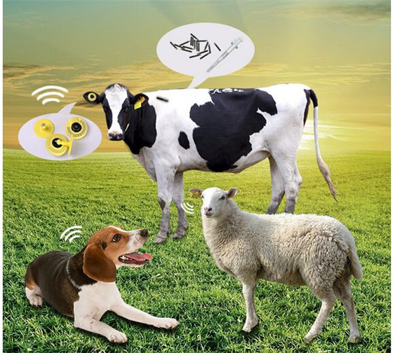 Animal Food Traceability System RFID Solution--RFID Animal ear Tag